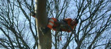 Tree Cutting Harmondsworth